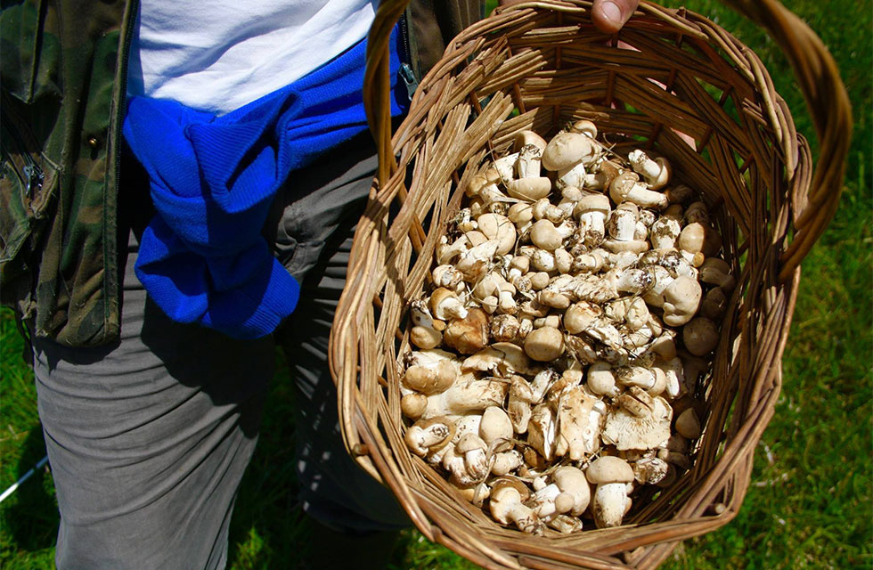 Mushroom hunting on Abruzzo Italy Food Tours with Italian Provincial Tours