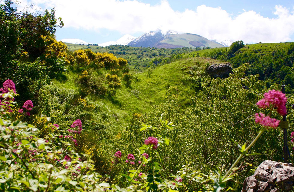 La Majella mountain and wildflowers on walking Abruzzo Tours of Italy
