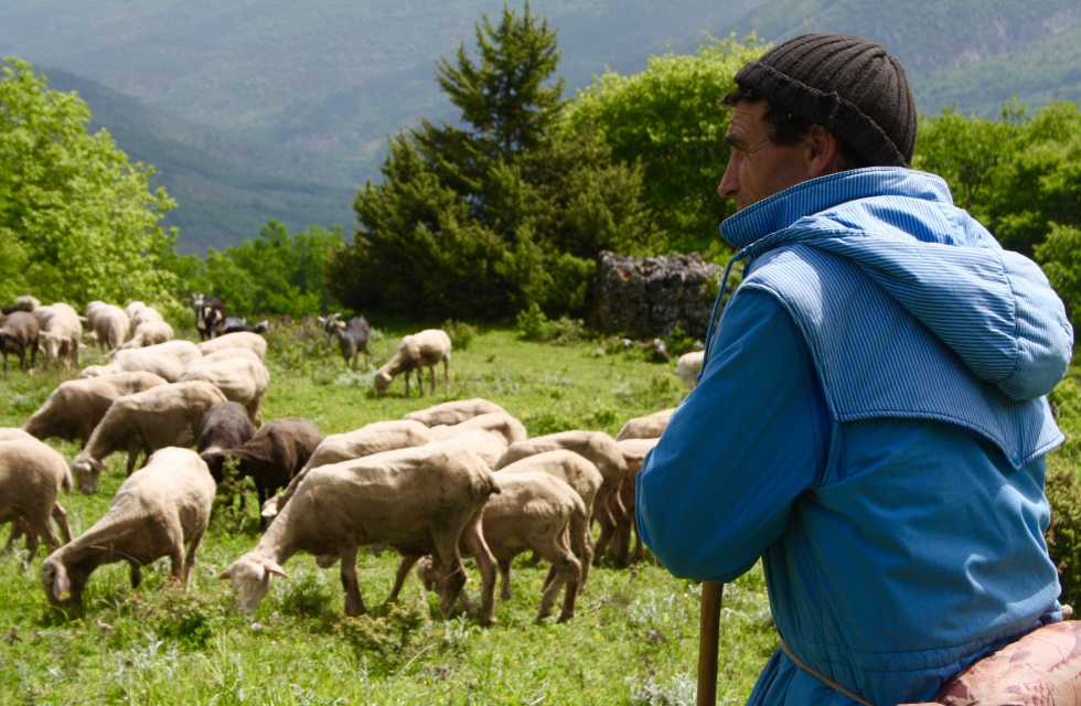 Small Group Tours Italy Shepherd and his flock in Abruzzo