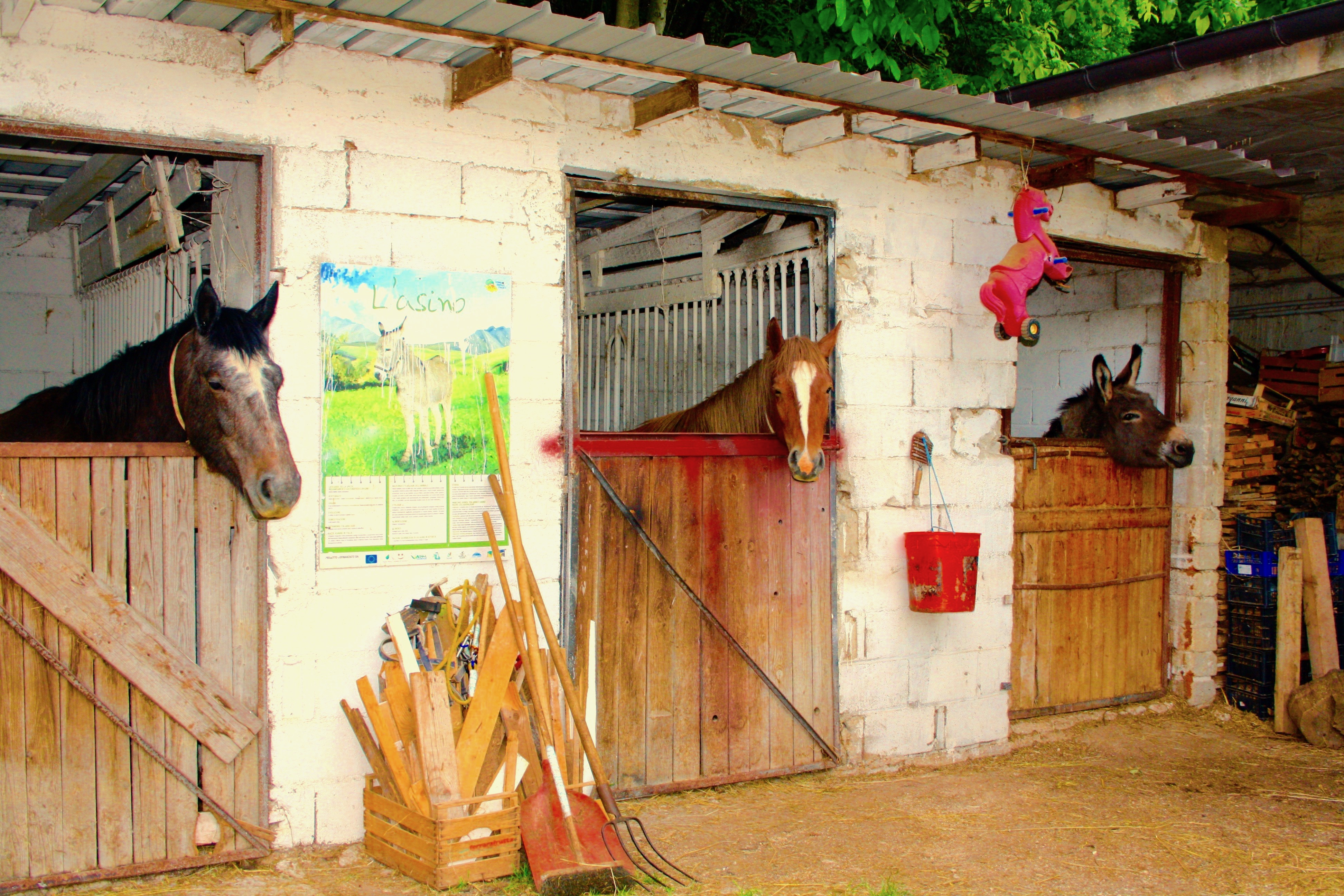 Stables at an agritourismo in Abruzzo