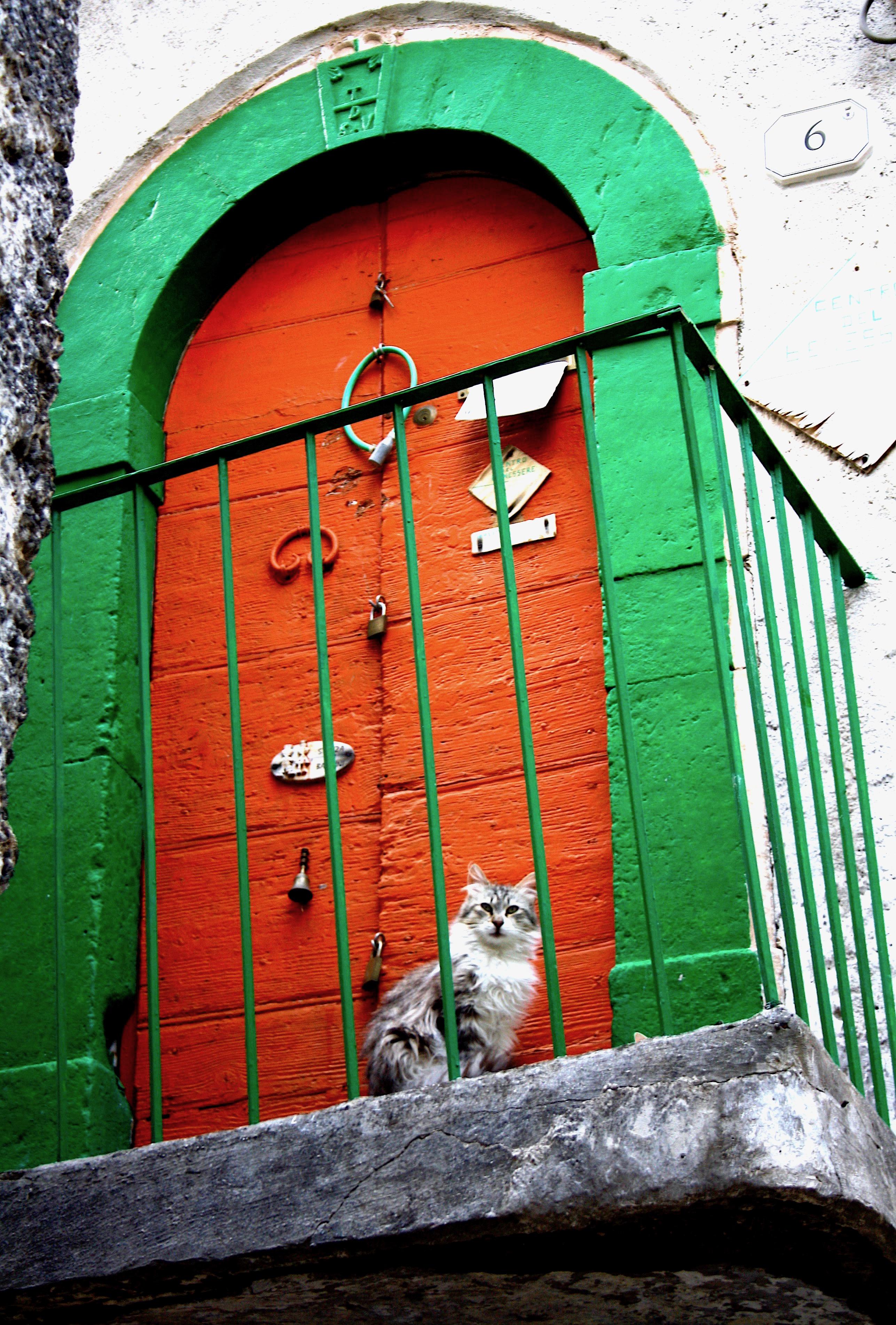 Cat sitting outside a colourful Italian door in Pettorano sul Gizio, Abruzzo Italy