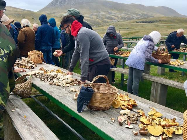 mushroom-hunting-Italy-tour
